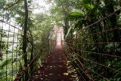 Foresta della nuvola di Monteverde immagini stock