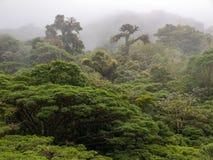 Foresta della nuvola di Monteverde in Costa Rica Immagini Stock Libere da Diritti