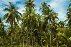 Foresta della palma. Fotografie Stock