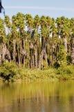 Foresta della palma Fotografie Stock