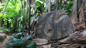 Foresta della palma di Vallee De Mai in Praslin stock footage
