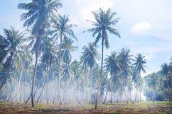 Foresta della palma sull'isola tropicale in Tailandia Fotografia Stock Libera da Diritti