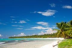 Foresta della palma sulla spiaggia caraibica Fotografia Stock