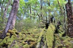Foresta della pista di Routeburn Fotografie Stock