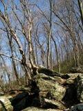 Foresta della polvere nera in marzo fotografie stock libere da diritti