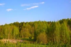 Foresta della primavera Immagine Stock Libera da Diritti