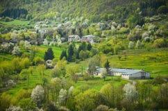 Foresta della primavera con tutti i toni di colore della foto luminosa verde e speciale dalla natura selvaggia, degli alberi, del Fotografia Stock