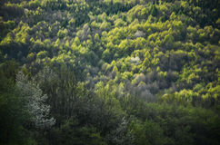 Foresta della primavera con tutti i toni di colore della foto luminosa verde e speciale dalla natura selvaggia, degli alberi, del Fotografie Stock