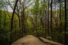 Foresta della primavera in montagna della Tabella Immagine Stock Libera da Diritti