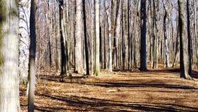 Foresta della primavera nel giorno soleggiato Fotografie Stock Libere da Diritti