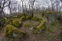 Foresta della quercia con le rocce del granito coperte in muschio verde Fotografie Stock
