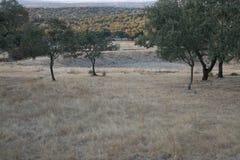 Foresta della quercia di estate Immagine Stock
