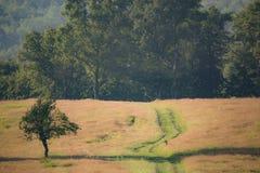 Foresta della quercia e una piccola quercia nella parte anteriore Immagine Stock