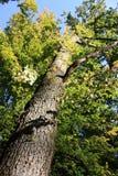 Foresta della quercia in Francia Fotografie Stock Libere da Diritti