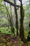 Foresta della reliquia nella nebbia immagine stock