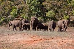 Foresta della riserva di Periyar, Thekkady Kerala fotografia stock libera da diritti
