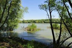 Foresta della riva del fiume Fotografia Stock
