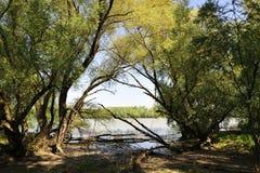 Foresta della riva del fiume Immagini Stock