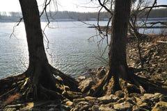 Foresta della riva del fiume Fotografie Stock Libere da Diritti