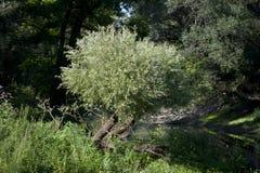 Foresta della riva del fiume Immagine Stock Libera da Diritti