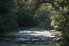Foresta della riva del fiume Fotografie Stock