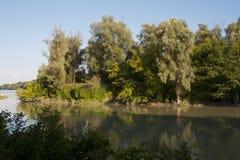 Foresta della riva del fiume Fotografia Stock Libera da Diritti
