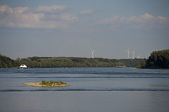 Foresta della riva del fiume Immagine Stock