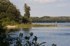 Foresta della riva del fiume Immagini Stock Libere da Diritti