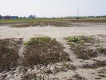 Foresta della riva del fiume dopo l'inondazione Immagine Stock