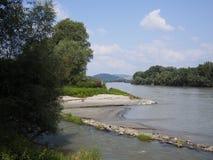 Foresta della riva del fiume dopo l'inondazione Fotografie Stock