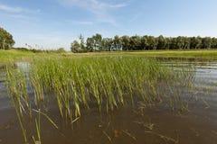 Foresta della riva del fiume dopo l'inondazione Immagine Stock Libera da Diritti