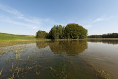 Foresta della riva del fiume dopo l'inondazione Immagini Stock