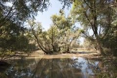 Foresta della riva del fiume dopo l'inondazione Fotografia Stock