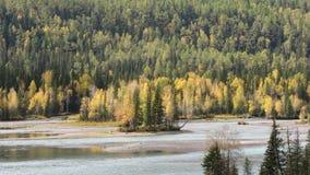 Foresta della riva del fiume in Kanas Fotografia Stock Libera da Diritti