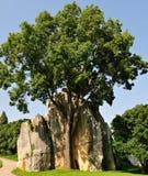Foresta della roccia granitica caolinizzata Fotografia Stock
