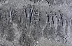 Foresta della sabbia Immagini Stock