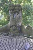 Foresta della scimmia Immagini Stock