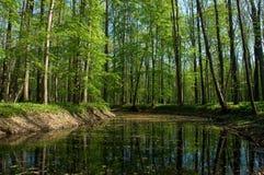 Foresta della sorgente Fotografie Stock
