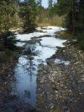 Foresta della sorgente Immagini Stock