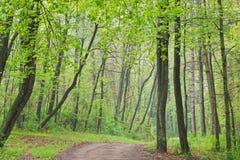 Foresta della sorgente con la traccia Fotografia Stock