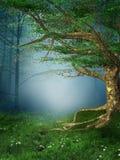 Foresta della sorgente con le margherite Immagine Stock Libera da Diritti