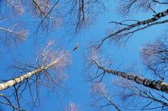 Foresta della sorgente ed il cielo Fotografie Stock Libere da Diritti