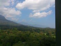 Foresta della Sri Lanka immagini stock