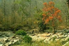 Foresta della Tailandia Immagine Stock