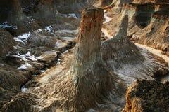 Foresta della terra Immagine Stock