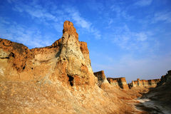 Foresta della terra sotto il cielo blu Fotografie Stock