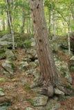 Foresta della traccia della cava Fotografia Stock Libera da Diritti
