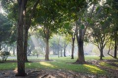 Foresta delle latifoglie verdi fresche incorniciate dalle foglie, w Fotografia Stock