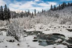 Foresta dello Snowy Fotografia Stock