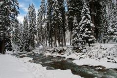 Foresta dello Snowy Fotografie Stock